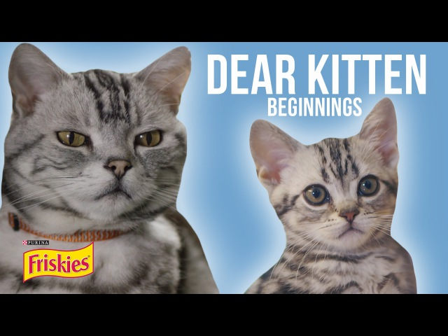 Dear Kitten Beginnings Presented By BuzzFeed Friskies