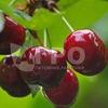 Питомник растений Агро