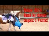 Пони и кони. Будни французских поней и коней или как правильно терять всадника