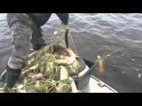 Рыбалка сетью на Иртыше 2015сами в шоке