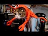 Коты и Собачки на Хэллоуин