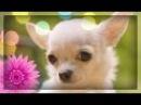 Смешное Видео Про Забавных Животных! 2. Прикольные животные домашние