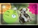 Милые Собаки На Качелях! Забавные животные собаки