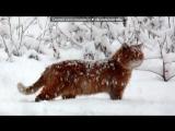 «Зимние наблюдения» под музыку Пётр Дранга   - Вивальди: Времена года, Зима, Декабрь.  . Picrolla