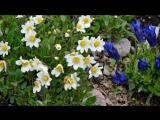 «Марина Александрова - Привет, весна (сл.И.Краса, муз.Г.Туксишвили). Picrolla