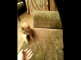 наш дрессированный кот