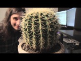 Gourski - Springtime Cactus Meets Drum&ampBass