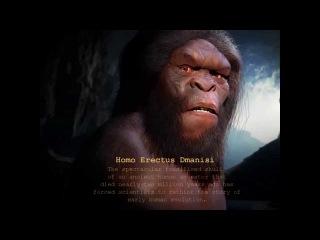 Homo Erectus Dmanisi