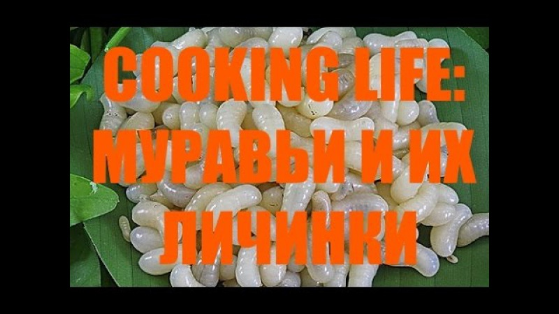 COOKING LIFE: МУРАВЬИ И ИХ ЛИЧИНКИ