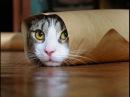 Приколы с кошками Приколы про кошек до слез видео