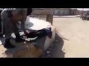 Публичный расстрел в Сирии
