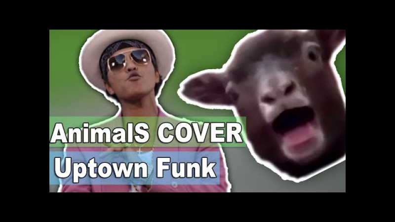 Animals Cover ★ Mark Ronson - Uptown Funk ft. Bruno Mars