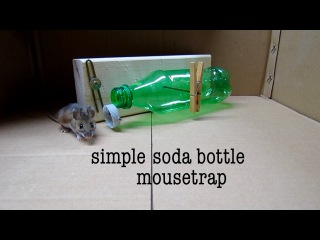 How to make ● a simple soda bottle humane mouse trap (that works!)