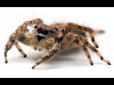 9. Тип Членистоногие, класс Паукообразные (экспресс - электив Зоология) - подготовка к ОГЭ и ЕГЭ