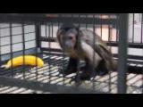 Прикольная обезьянка катается на тарелке))Просто супер)))))