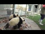Легко ли работать с пандами
