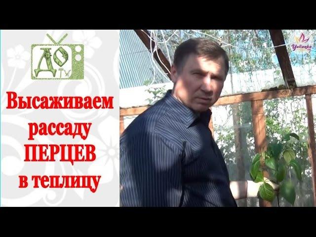 Высаживаем рассаду ПЕРЦЕВ в теплицу грунт Советы по посадке