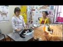О процедуре стерилизации кошек салон четыре с хвостиком г Абакан