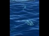 """Это был просто писец!!! В верхней части экрана смотрите какая херня плавает ! Простите за мат в видео, но мы реально охренели!!!"""""""
