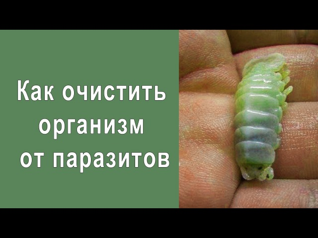 Как очистить организм от паразитов
