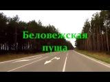 Дорога к озеру Сипурка в Беловежской пуще
