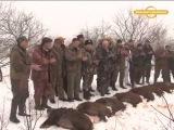 Охота на кабана загоном Охота и рыбалка в регионах России