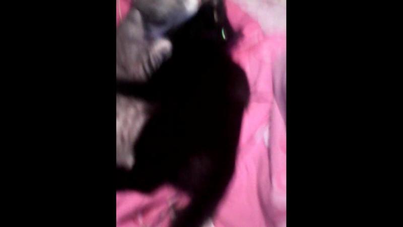 Мои кошки Мася и Нюша33