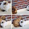 Помощь бездомным животным в СПБ!