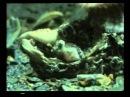 Рыбы Познавательный фильм для детей и не только