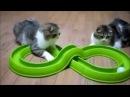 Приколы с котами, смешные и забавные (Funny Cats). Нарезка интересных видео про котов, часть 6