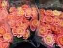 Где можно купить розы оптом в воронеже купить тюльпаны белая церковь
