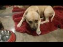 Моя любимая собака Рич