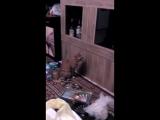 кот просит открыть ему бар