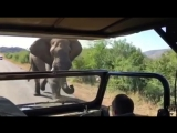 I couldn't have written this safari encounter better if it was a movie.