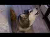 Ария Царицы ночи Волшебная флейта исполняет - Диана)))