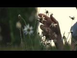 Nicholas Gunn - Twilight