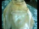 Рыба-мутант оказалась похожа на ската