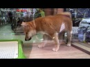 Dog puppy So Cute | Cleaning cage | Hong Kong china Ladies Market Pet shop