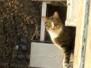 Котэ Паркурист (parkour cat)