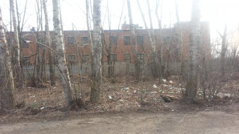 Житель Чистополя пожаловался на труп собаки, лежащий у дороги – «Народный контроль»