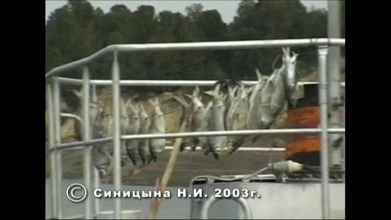 Полноват село переселенцев ссыльных и рыбаков