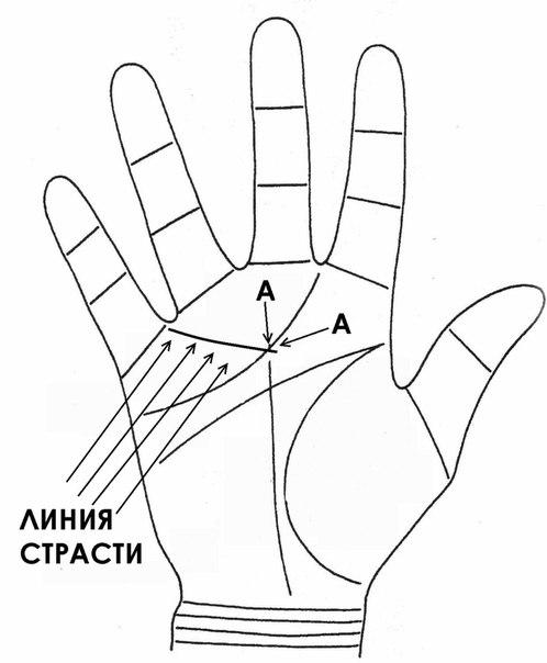 Об определении сексуальной совместимости по руке NymdmyMvk5w