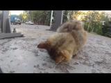 Кот лицом в бетон...