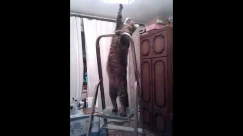 Прикол с котом.Кот электрик.