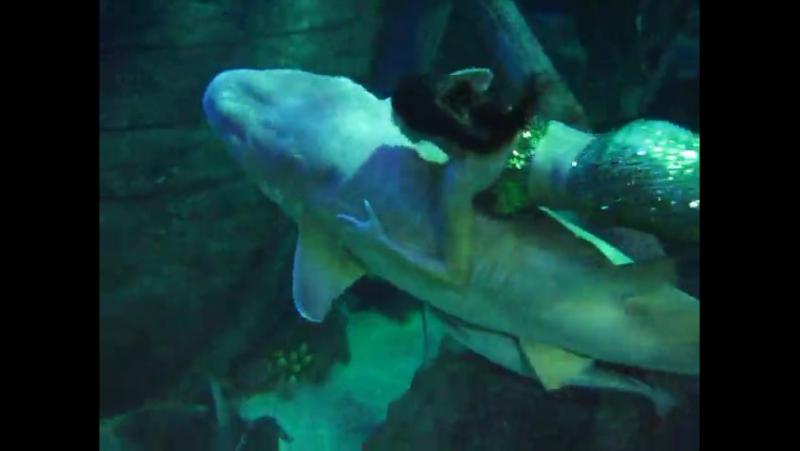 Русалка с Няшей во время шоу программы в Адлерском океанариуме