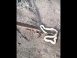 Убили змею в огороде