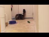 Реакция котов на огурцы ч.2