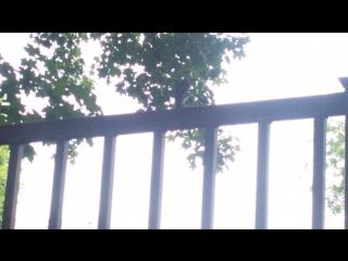 Зяблик поёт!) 30.05.2016г. Москва. Район Северное Тушино.