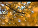 Светлана Резанова Засыпят листья