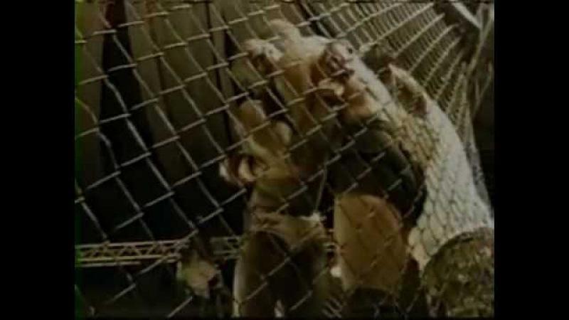 Cyborg vs Pele bvf 8 1997